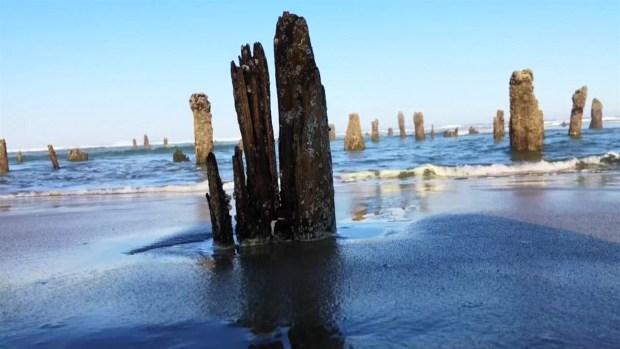 """[TLMD - NATL] """"Bosque fantasma"""" en una playa augura tsunamis y terremotos"""