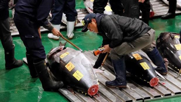 [TLMD - NATL] Precio récord por un atún en subasta  de Tokio