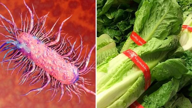 Qué es la temible bacteria E. coli y por qué es tan peligrosa