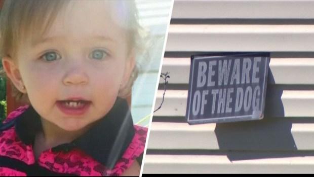 """""""Hice todo lo que pude"""": pitbull ataca y mata a bebé de un año"""