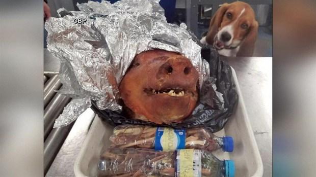 [TLMD - LV] Perro aduanero halla lechón asado en una maleta