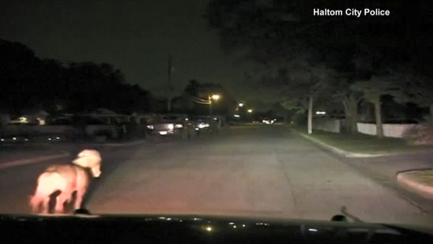 [TLMD - LV] La persecución policial más tierna que has visto