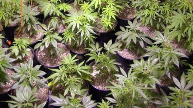 Video: Un éxito el 1er mercado de marihuana