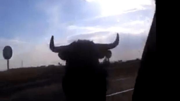 Video: Un toro desata el pánico en carretera