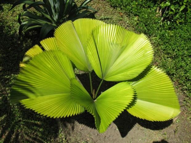 10 plantas que limpian el aire