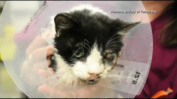 Vídeo: ¡Un gato regresa de la tumba!