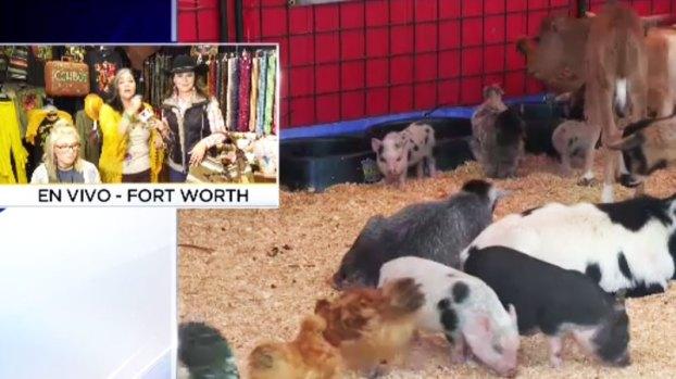[TLMD - Dallas] Arranca con todo el Fort Worth Stock Show & Rodeo