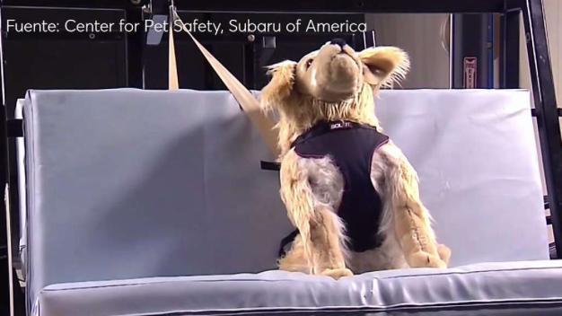 El peligro de llevar a tus mascotas en el vehículo