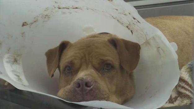Rehabilitación para animales tras llegar a albergue