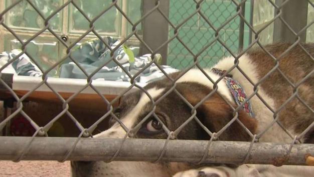 Humane Society ofrecerá adopción de mascotas gratis