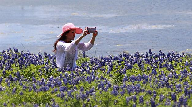 """Texas se pinta de índigo con el """"Bluebonnet Festival"""""""