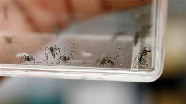 Cruz Roja prepara operativo contra transmisor del Zika
