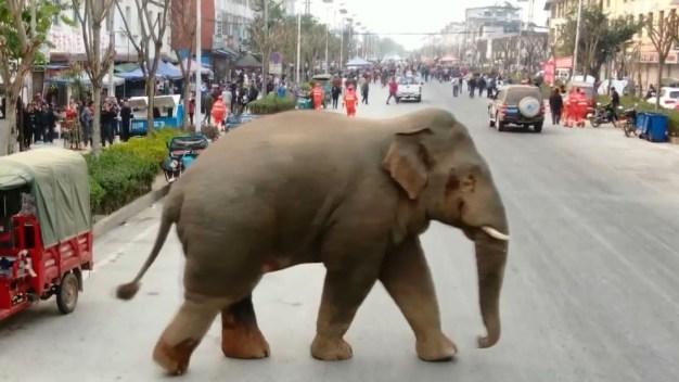 En video: elefante salvaje crea caos en un poblado