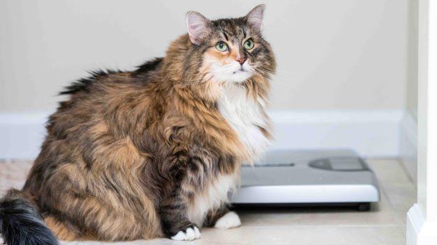 """""""La comida no es recompensa"""": cómo mantener tus mascotas en la línea sin dieta"""