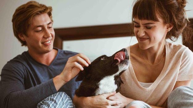 Estudio: los perros pueden ser los peores enemigos para las relaciones amorosas
