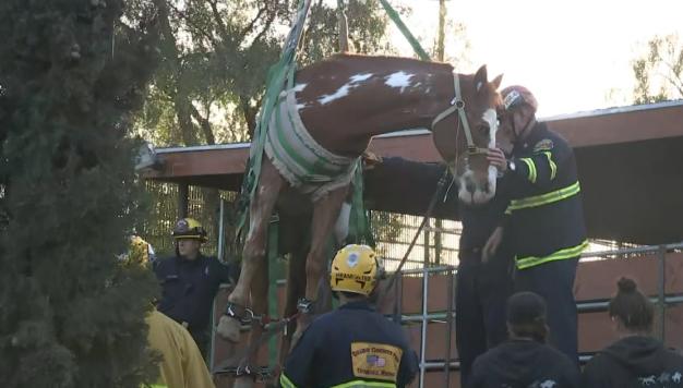 En video: rescatan a caballo que cayó en un contenedor de basura