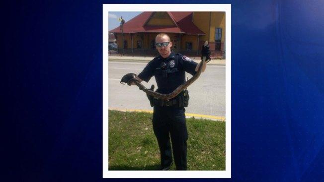 Oficiales rescatan a serpiente al norte de Texas