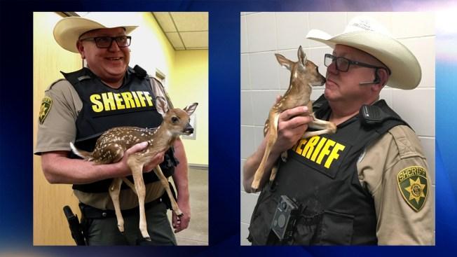 Policia de Texas rescata a un pequeño ciervo