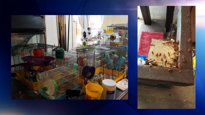 Hallan animales en condiciones deplorables en Grand Prairie
