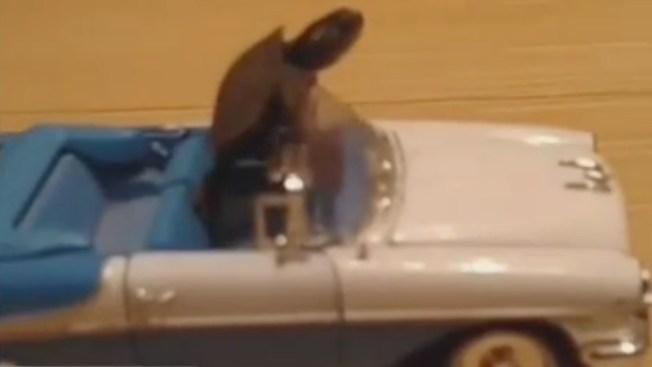 Una tortuga conquista las redes sociales