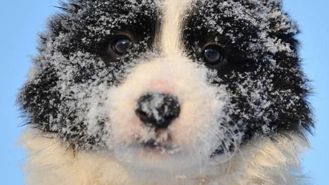 Envía tu foto de la nevada en DFW