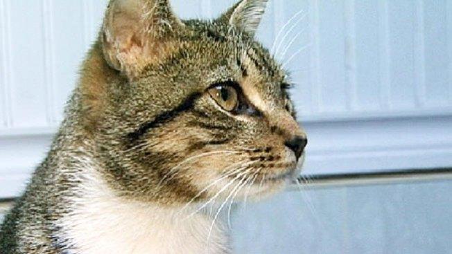 Irving: ofertas para adoptar gatos