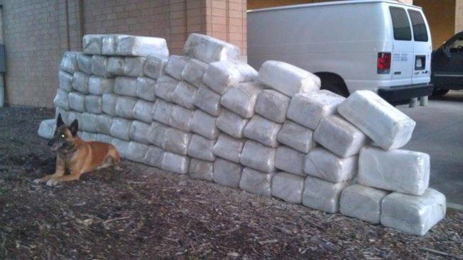 Decomisan millones en marihuana