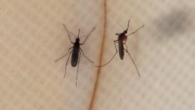 Agotado: repelente de insectos