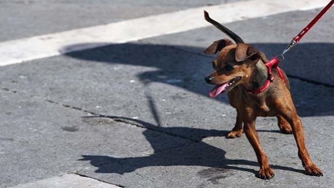 Campaña para esterilizar mascotas