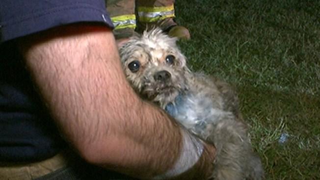 Rescatan a un perro entre las llamas