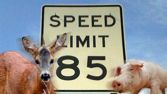 Animales en autopista veloz