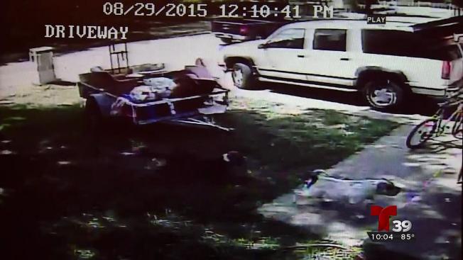 Mujer fue atacada por dos pit bulls frente a su casa