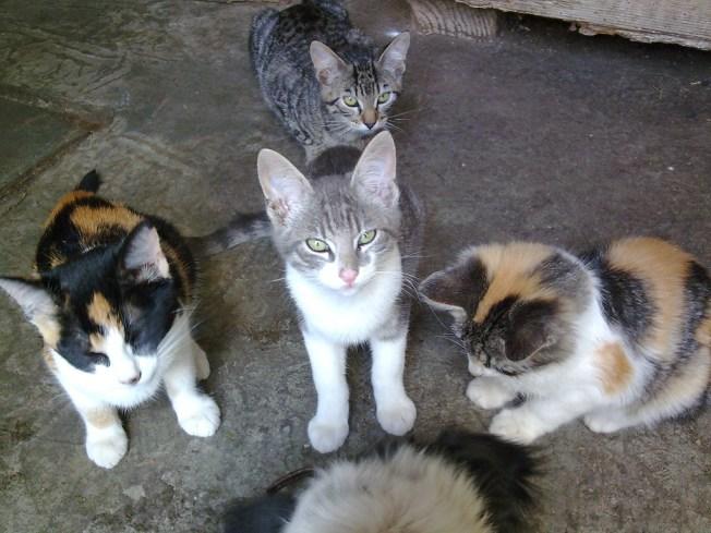 Rescatan 122 gatos en condiciones deplorables