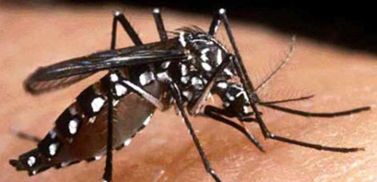 Confirman caso del virus de Chikungunya en el Metroplex